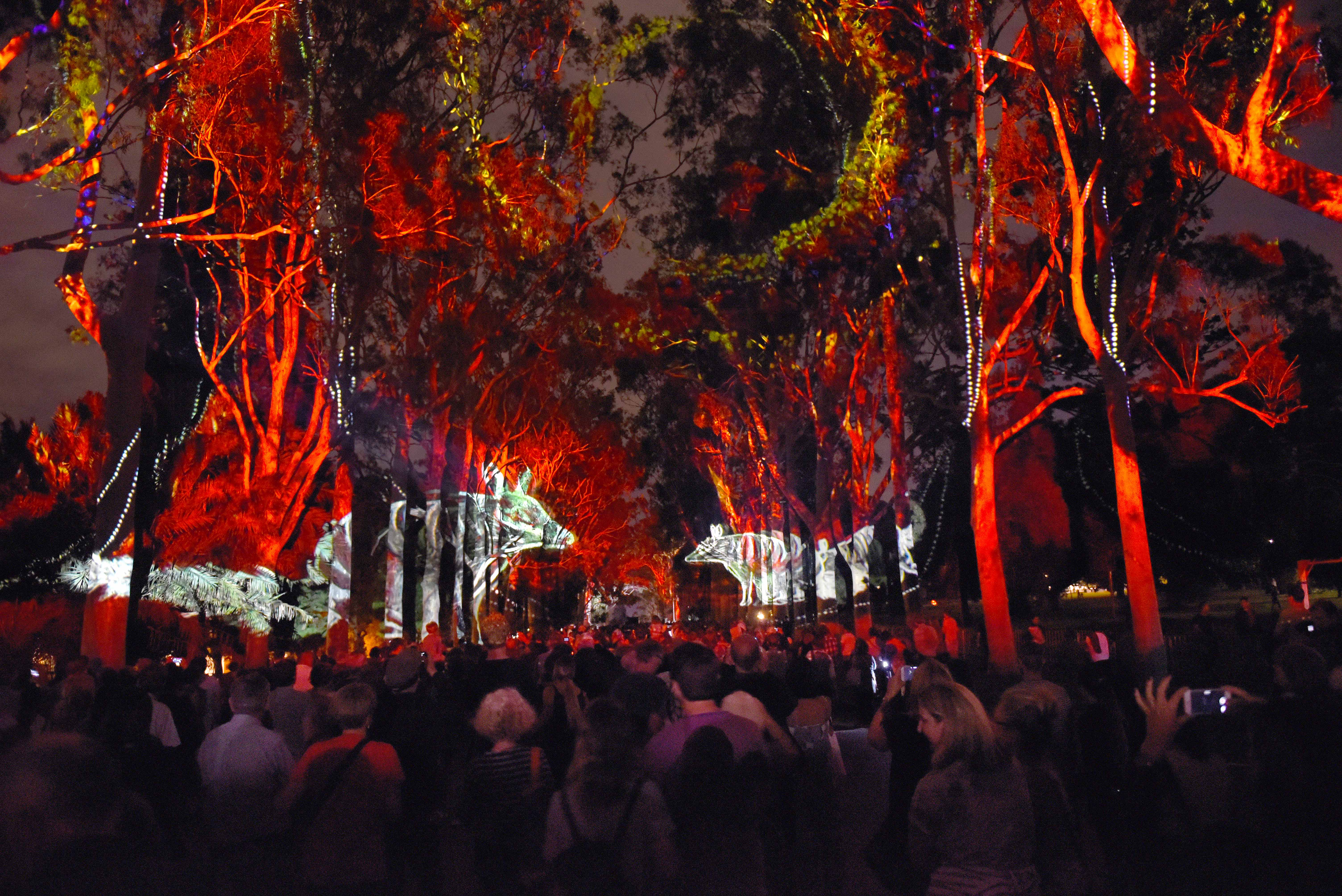 Projected lights on trees at Kings Park